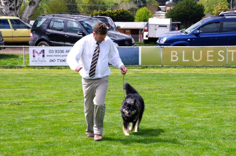 Dog Kennels Castlemaine